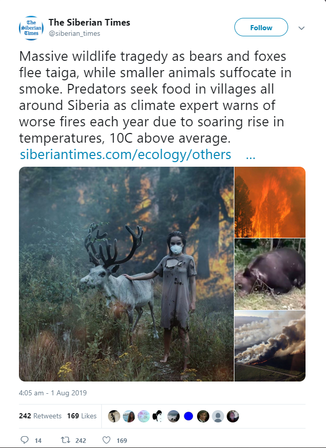 incendii Siberia